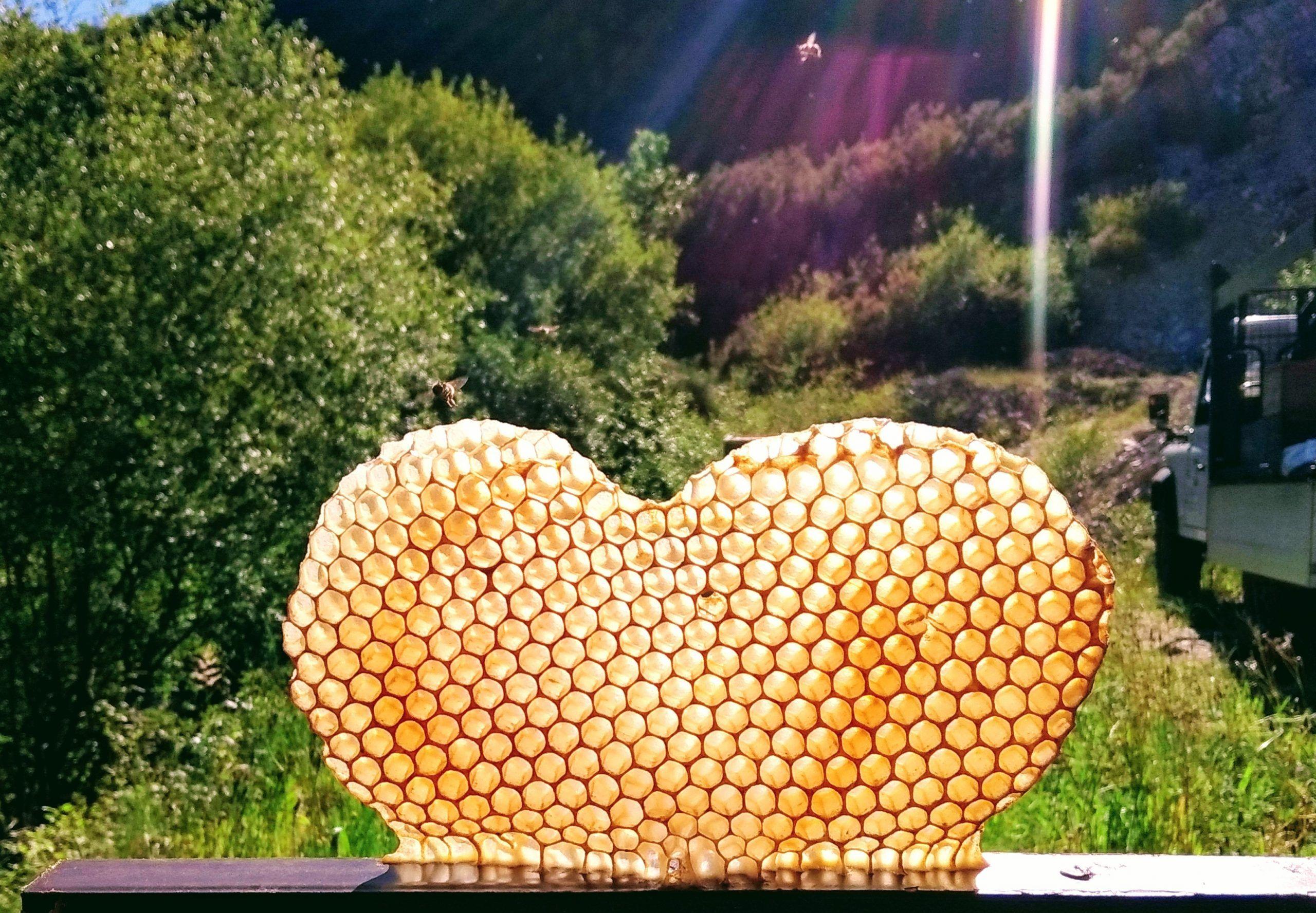 Panal de abeja corazón